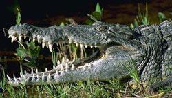 Экстремальные туры - встреча с опаснейшими животными