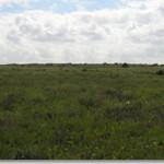 Хомутовская степь — животный мир заповедника