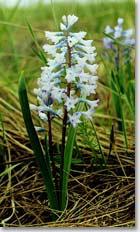 Хомутовская степь, растительность заповедника
