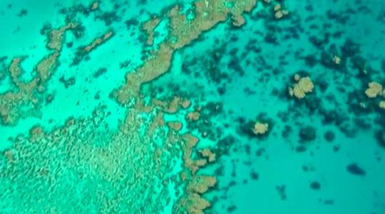 Большой Барьерный риф-2