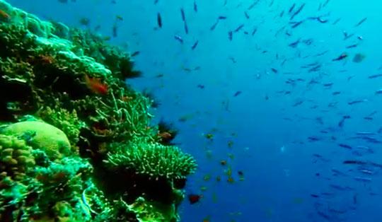 Большой Барьерный риф-4