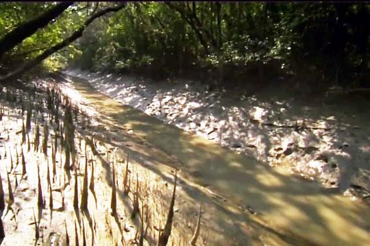 Река Ганг 3