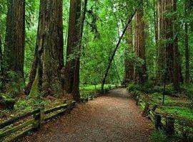 Редвуд - национальный парк в Америке