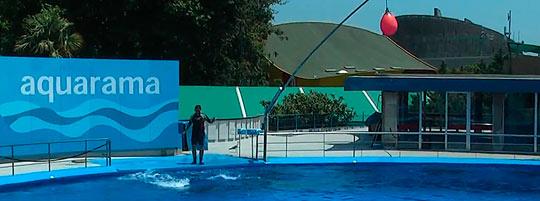 Жемчужина Барселонского зоопарка - бассейн