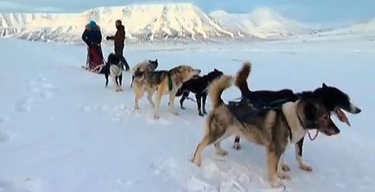 Катание на собаках по Шпицбергену