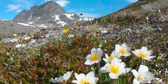 Галдхопигген — самая высокая гора в Норвегии