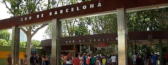 Возле входа в Барселонский зоопарк туристы могут купить различные сувениры