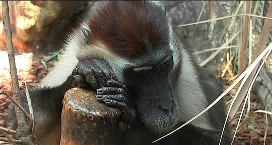 Изучение приматов