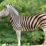 Зоопарк в Барселоне – одно из лучших воспоминаний