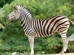 Зоопарк в Барселоне — одно из лучших воспоминаний