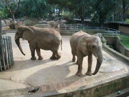 Прекрасный день в зоопарке Барселоны