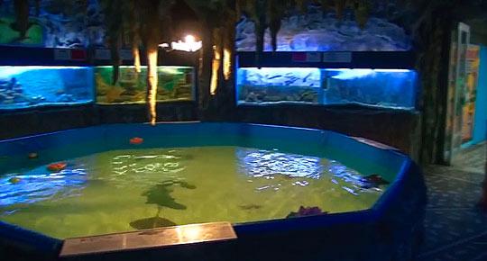 Алуштинский аквариум 1
