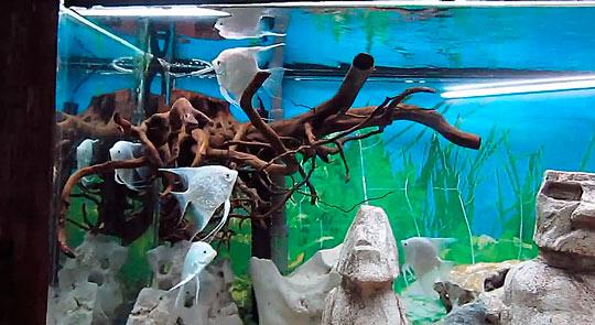 Алуштинский аквариум 2