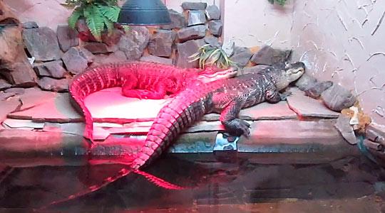 Алуштинский аквариум 3