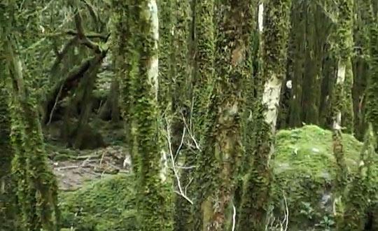 Жоэкварское ущелье - природа