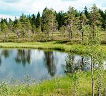 Финляндия – таежные леса, озера и Санта Клаус!