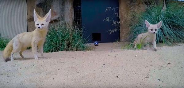 Зоопарк-1