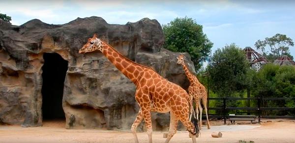 Зоопарк-4