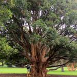 Королевский ботанический сад в Сиднее