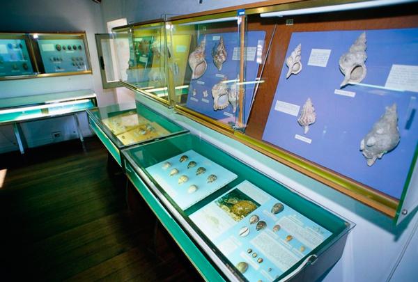 9-Museo-delle-Conchiglie