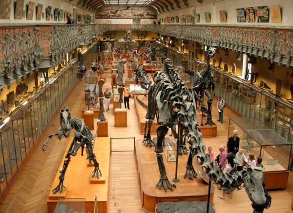 2-Городской-музей-естествознания