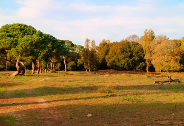 32-Природный-парк-«Сан-Россоре-Массачуколи»