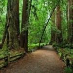 Редвуд — национальный парк в Америке