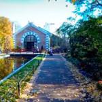 Как добраться до ботанического сада МГУ (Аптекарский огород)